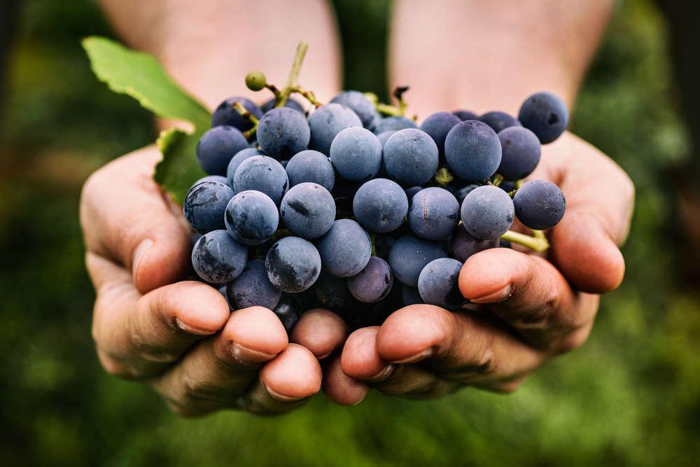 Gelatina di uva fragola con crema alla ricotta